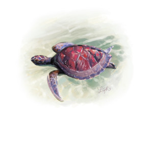 Daily Doodle: Red Sea Turtle